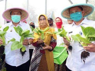 Kebun Sauyunan Bandung